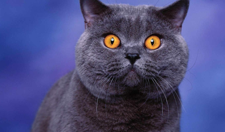 кошек, пород, породы, телефон, video, кот, файла, кошки, отзывы, внешности, характере, health, description, история,