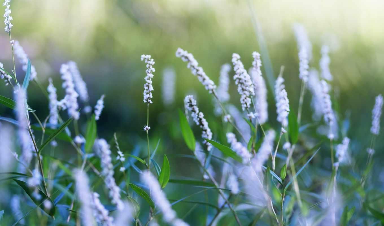 цветы, разных, мелкие, разрешениях, весна, sanya, спа,