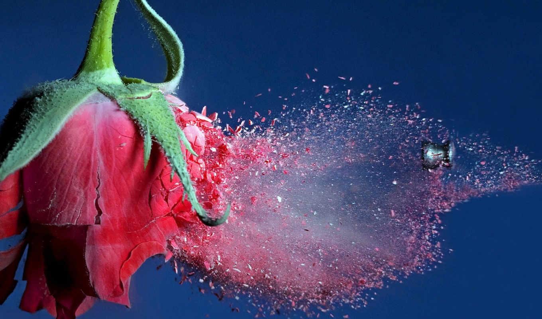 роза, красная, цветы, розы, пуля, осколки, full, полет,