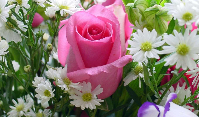 rosas, pinterest, google, rosa, con, roses, para, pin,