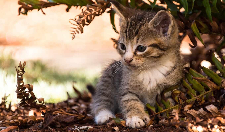 котенок, лист, малыш, добавить, кот, animal, cute, пожаловаться