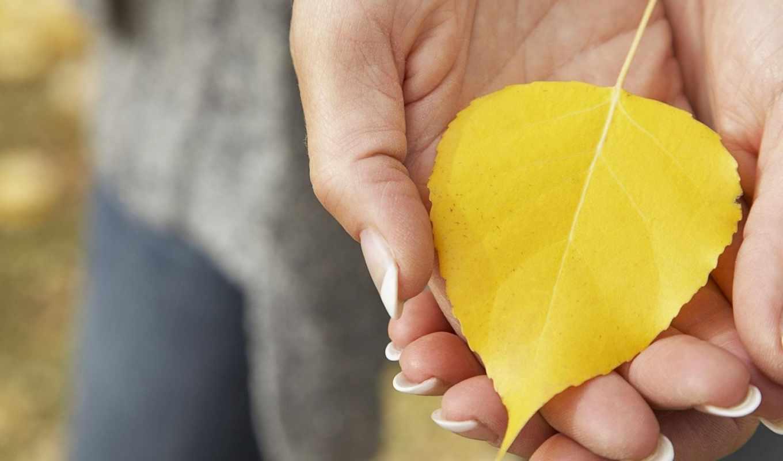 осень, лист, макро, жёлтый