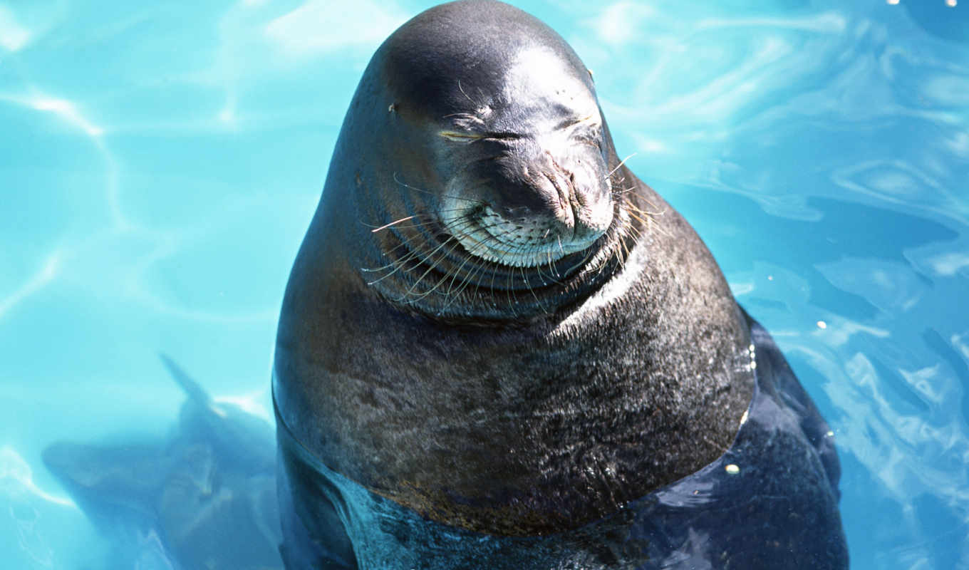 sea, lions, обои, wallpapers, and, download, photo