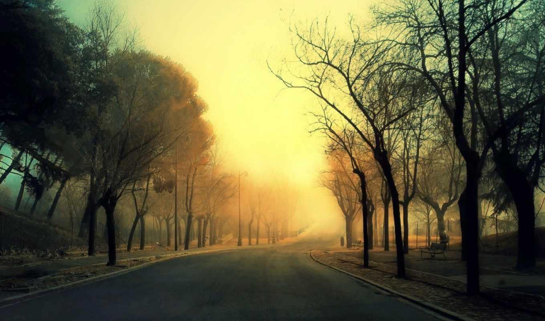 road, autumn, desktop, деревья,