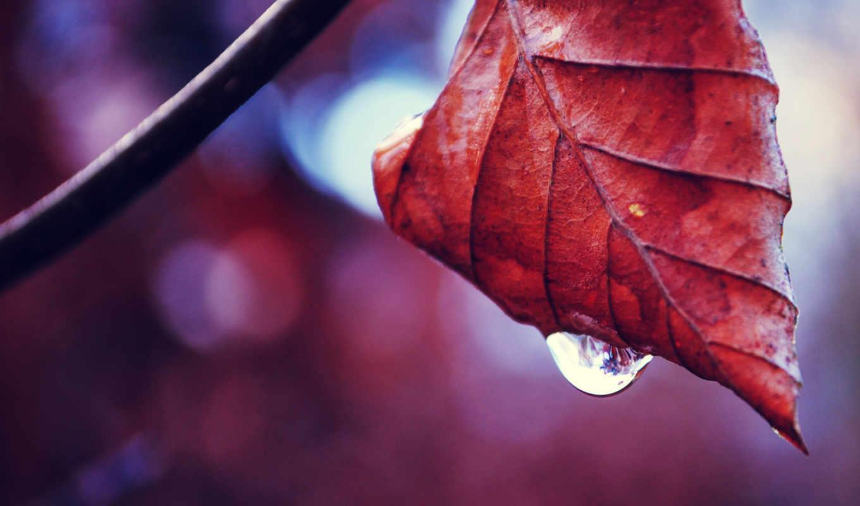 осень, water,