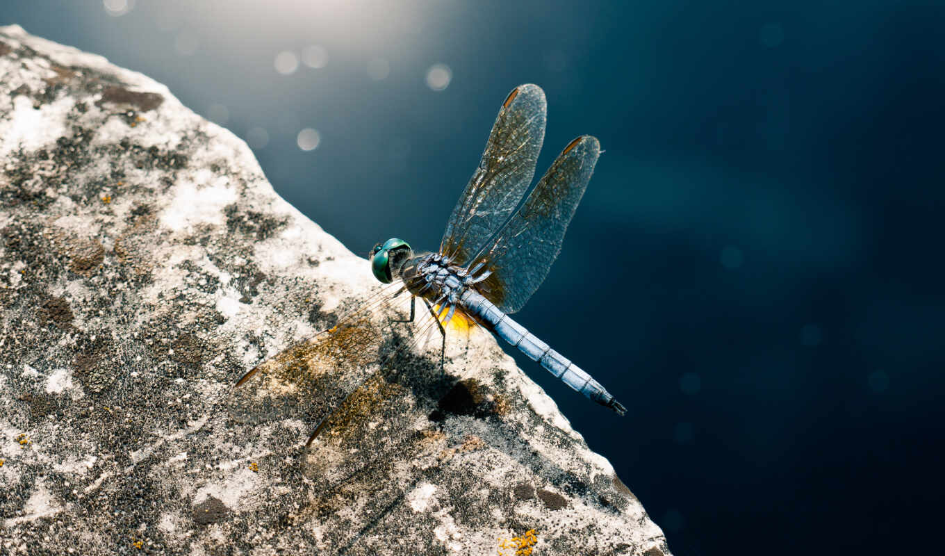 dragonfly, rock, mavi, imdb,