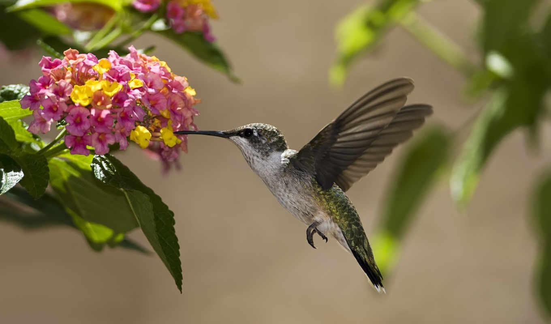 колибри, птица, цветы, лодки,