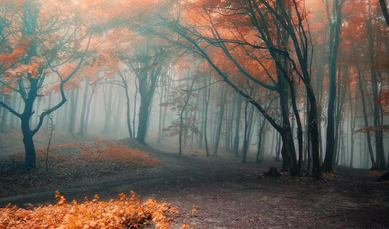 туман, природа, осень, деревья, landscape, леса, water, германия, листья, небо,