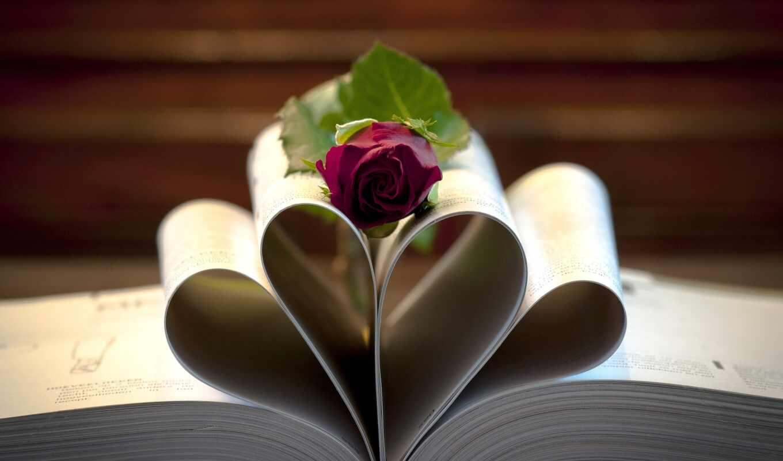 роза, книги, цветы, лежит, книга, розы, бордовая,