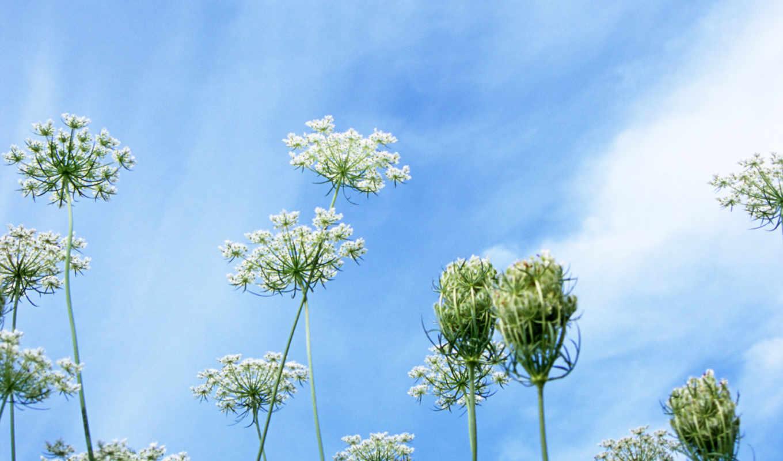 blue, небо, цветы, под, flowers, red, со, природа, лет,