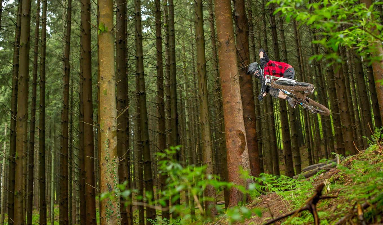 велосипед, спорт, леса, race, деревя, лес,