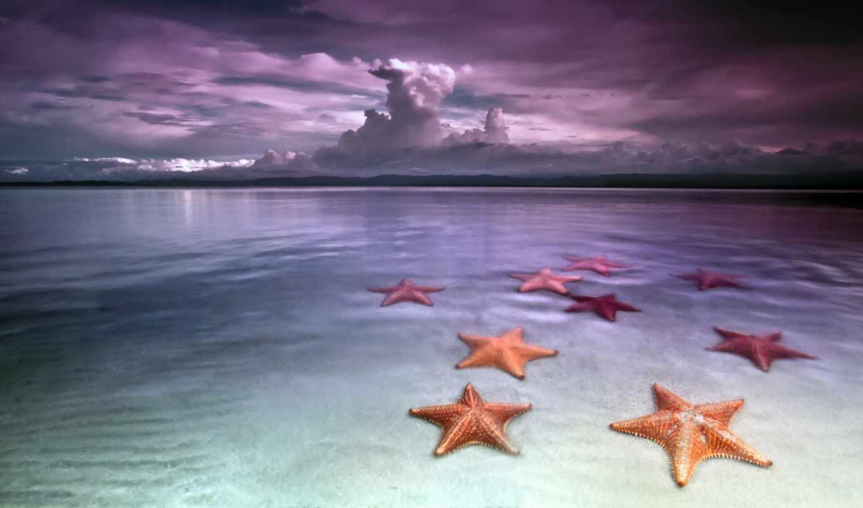 звезды, морские, пляж, del,