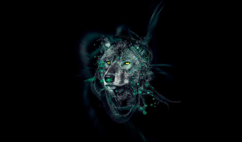 волк, хищник, волки, лес, серый, зверь, фотографий, украсить,