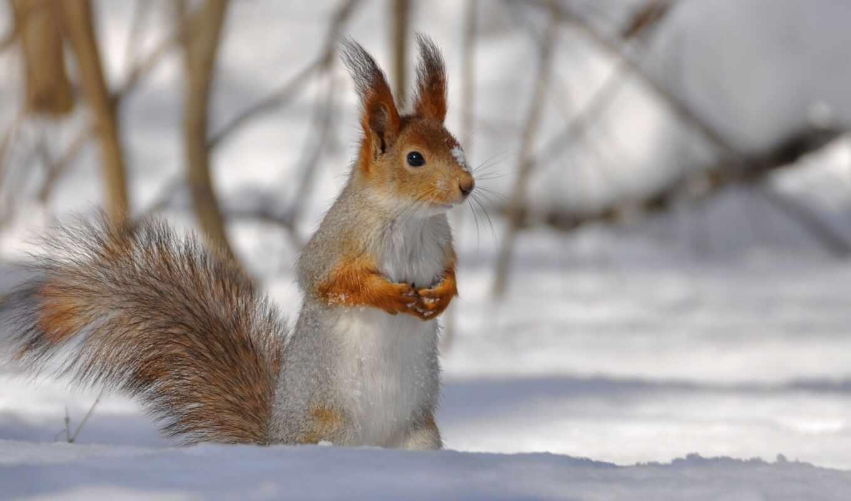 winter, branch, белки, animal, mobile, red, протеин, день, smartphone, white