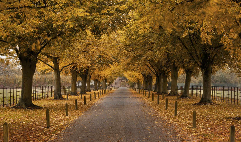 осень, деревья, аллея, забор, здание, картинка,