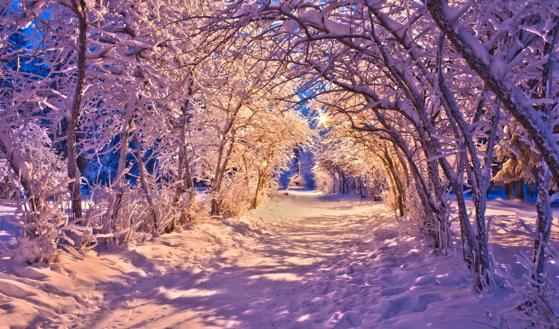 winter, вечер, снег, фонари, свет, природа, лес, trees,
