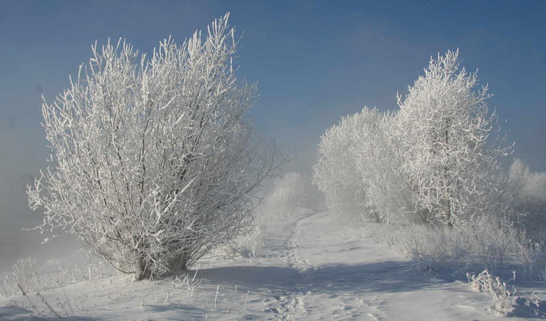 природа, зима, деревья, снег, картинка,