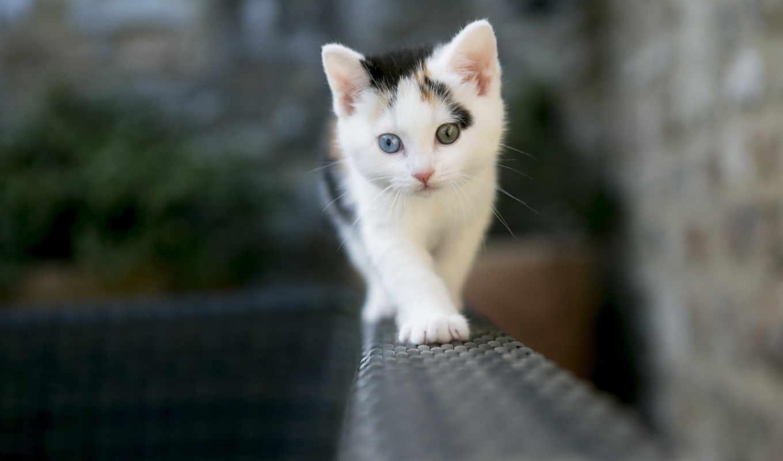 pantalla, fondos, gato, para, gatitos, кошки, smit, fotos, gratis,