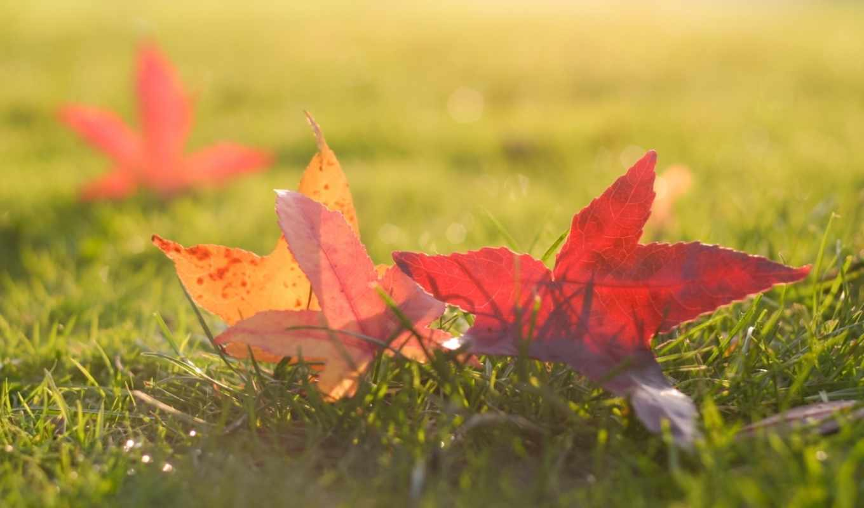 fall, ornare, with, autumn, leo, leaves, amet, slide, ipsum, melinα, sit, portfolio, swαg, phone, nullam, lacinia, you, what, this, curabitur,