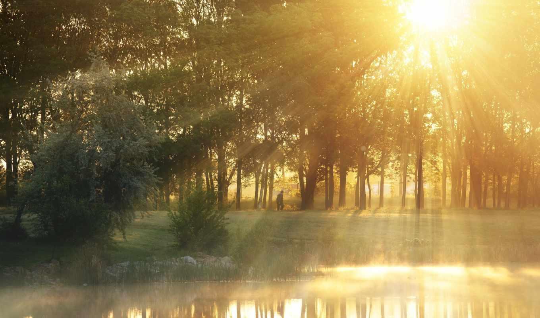листья, природа, дерево, лучи, солнце, туман