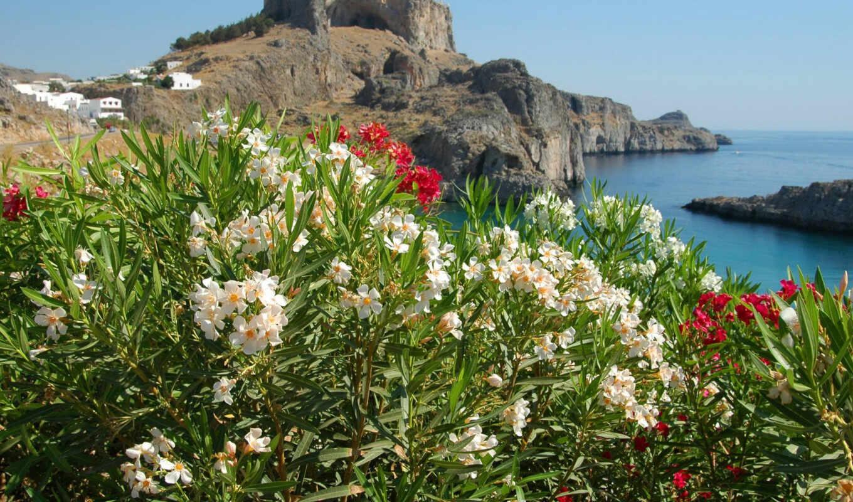цветы, моря, море, красивые,
