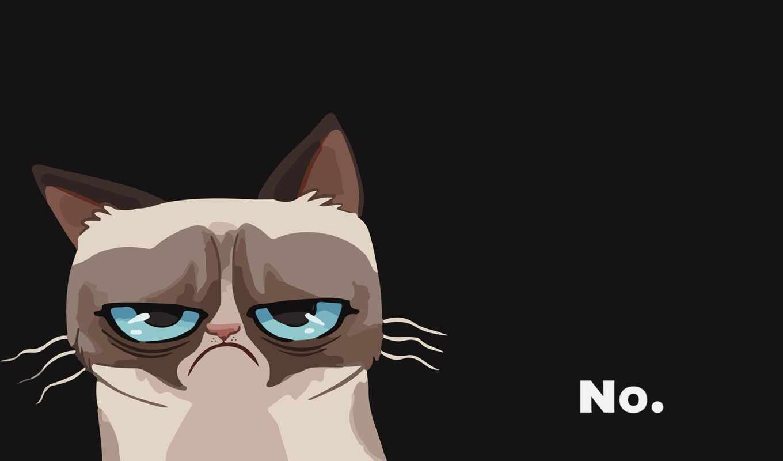 kot, кот, grumpy, злой, nou, grustnyi, пейзаж, восход, nedovolnyi, ugrumyi