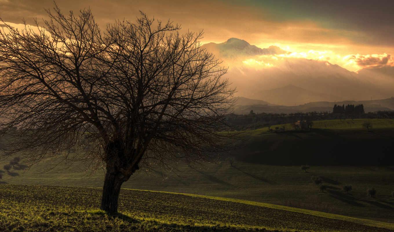 дерево, пейзажи -, красивые, без, марта,