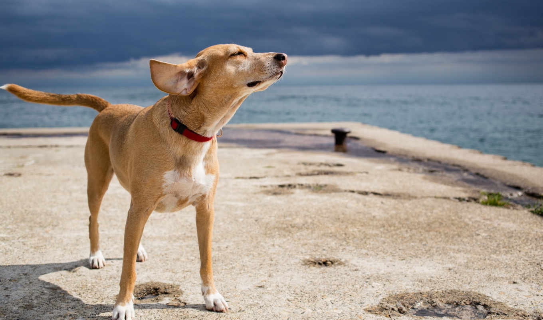 собака, друг, tags, море,