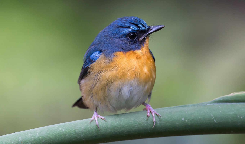 bird, animal,