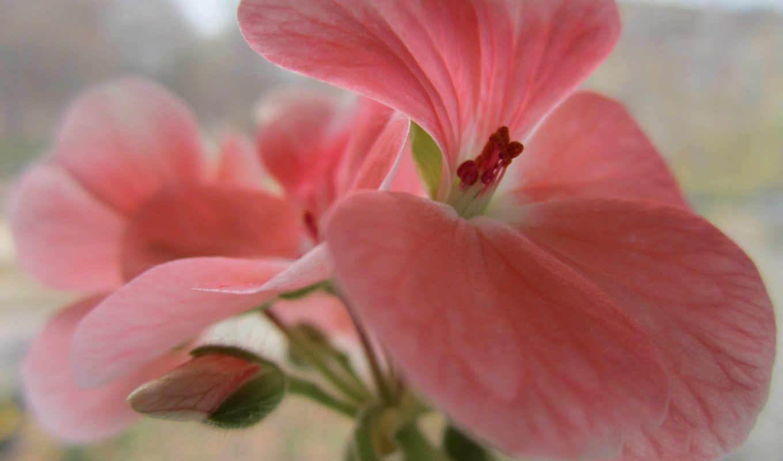 дневник, розовый, макро, фэнтези, virtual, широкоформатные, дрожат, росы, amazing, various, красивый, world, капли, темы, цветы, бутон,