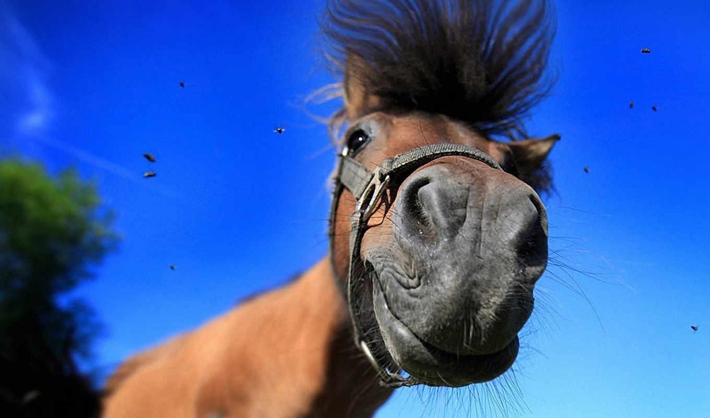 лошадь, лошадей, смешные, смешная, лошади, подборка,