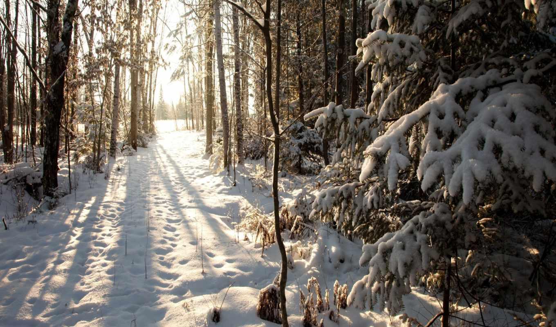 снег, winter, лес, cover, wisconsin, phillips,