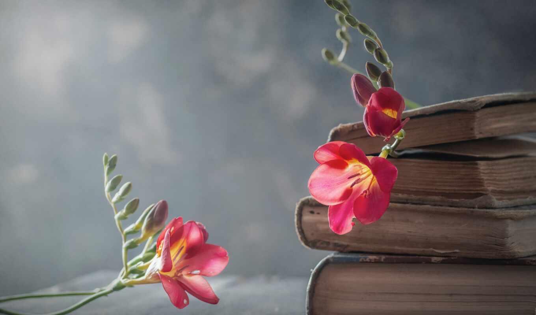 книга, цитат, ми, vislovit, virishit, цитата, one, zibratit, vũ, love