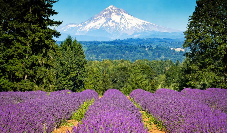 priroda, горы, лаванда, cvety,