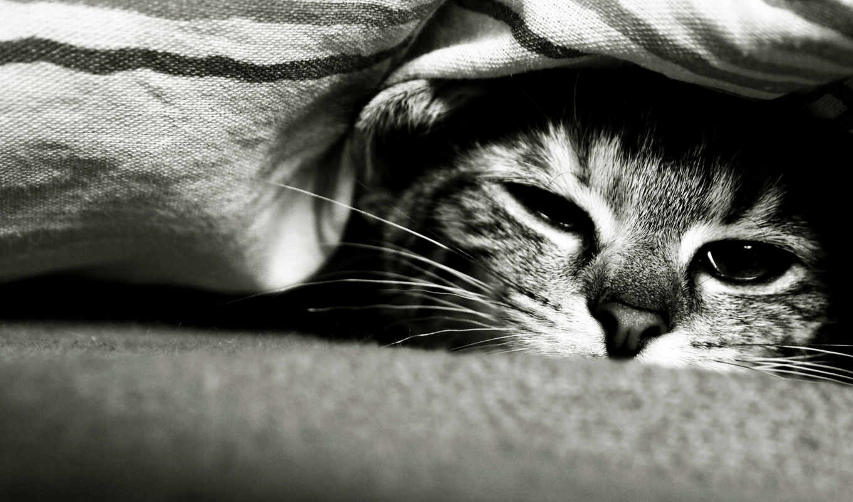 кот, под, спит, одеялом, три, until, за, но,