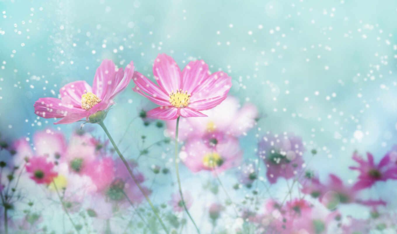 весенние, цветы, весна, картинок, коллекция,