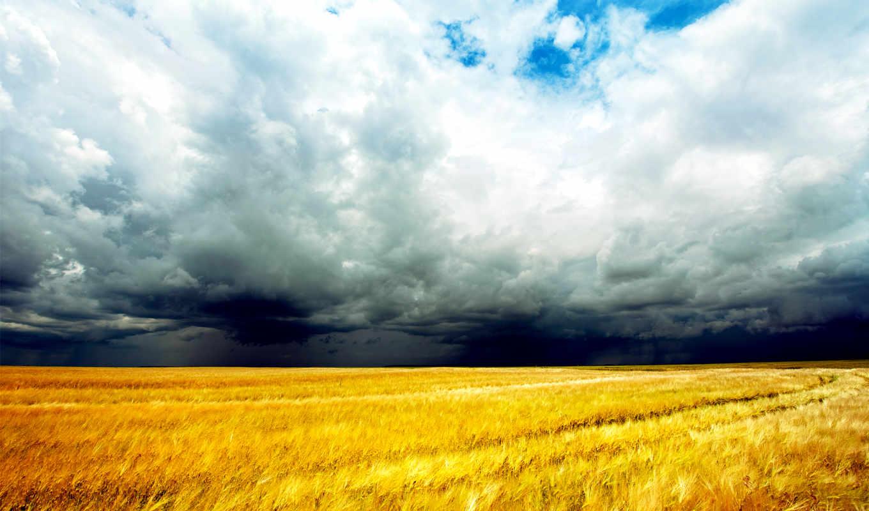 природа, поле, небо, пшеница, разделе, oblaka,