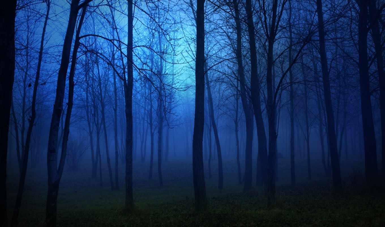 ночь, деревья, свет, landscape, лес, луна, darkness, fear,
