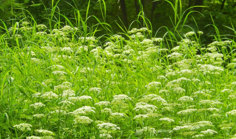 flowers, summer, pictures, трава, widescreen, деревья,
