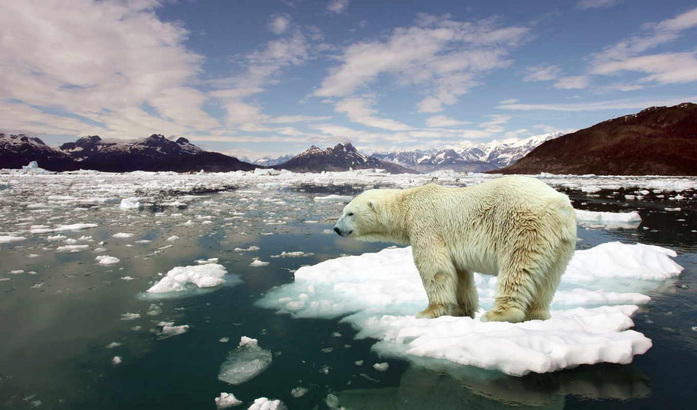 медведь, белый, арктика, снег, led, zhivotnye, zima, арктику,рисунки,