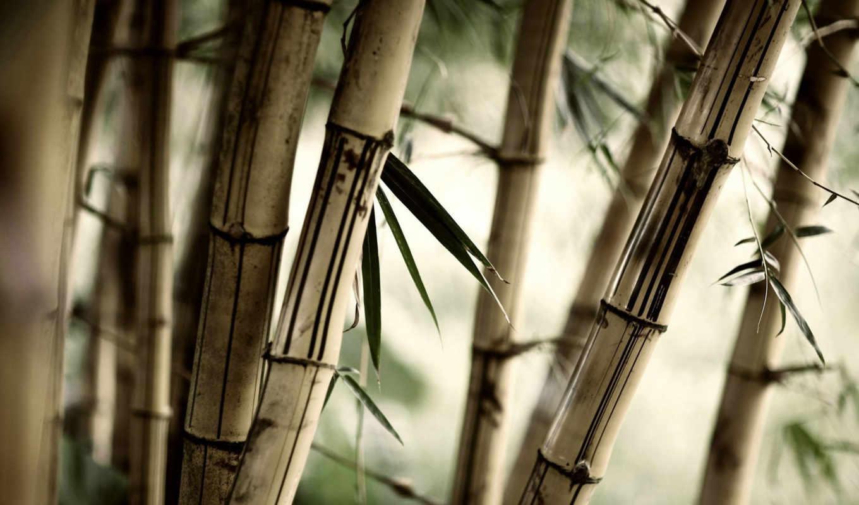 бамбук, растительность, взгляд, листья, широкоформатные,