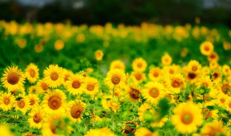 пейзажи -, макромашинымини, landscape, летние, природа,