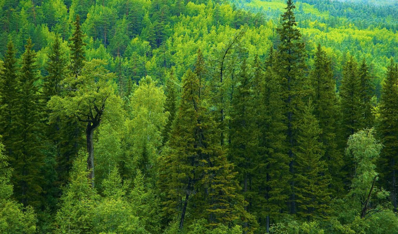 природа, леса, лес,