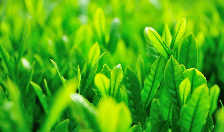 трава, макро, листья, картинка, зелёный,