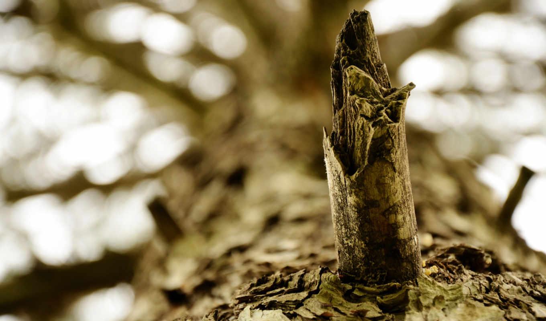 priroda, makro, кора, дерево, крона, макро, ветки, рисунки,