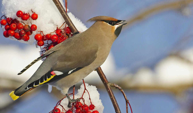птицы, birds, zhivotnye, снег, страусы,