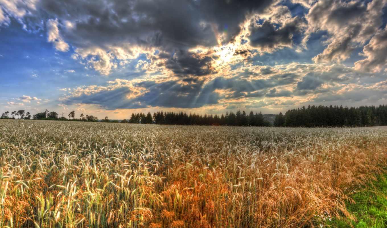 пшеница, you, поле, найти, desktop, hdr, первую, resolutions,