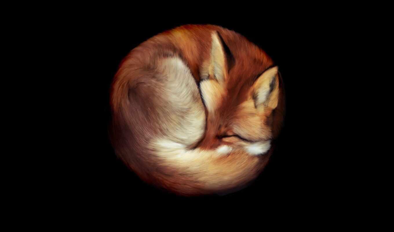 фокс, animal, спать, curl, мяч, narrow, funny