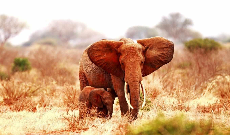 количество, слон, baby, марта, мб,