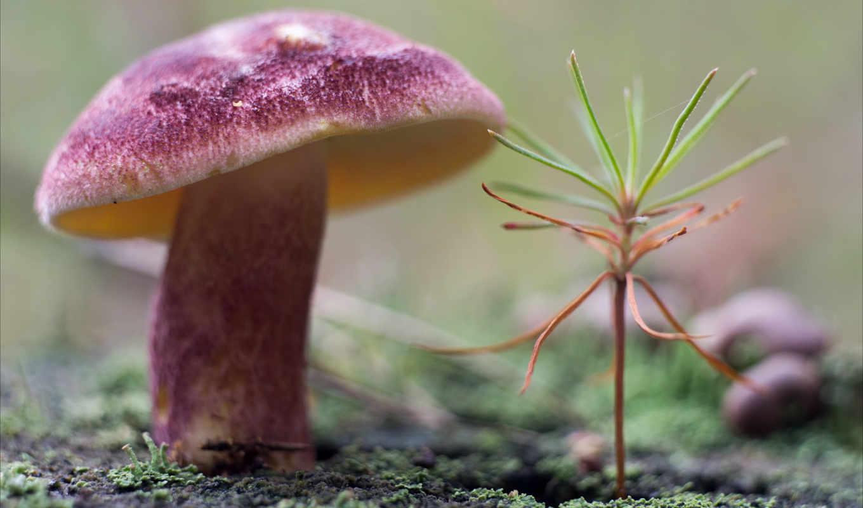 mushroom, fungi, фотообои, лесу, фотопанно, разную, доктор, подборка, тематику, dpi,